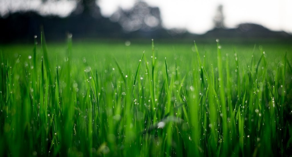 What is the Difference Between Dew vs Frost?