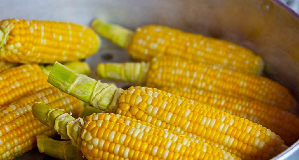 difference between maize vs corn